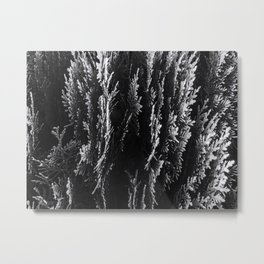 closeup leaf texture abstract background in black and white Metal Print