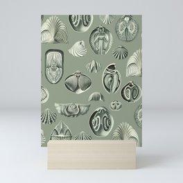Seashells #1 Mini Art Print