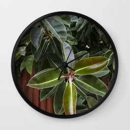 Rubber Tree Wall Clock