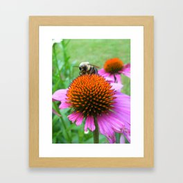 Bee on a Pink Flower Framed Art Print