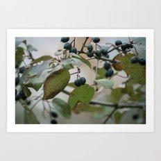 Overcast Berries Art Print