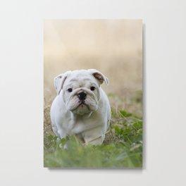 Walking Wrinkles Metal Print