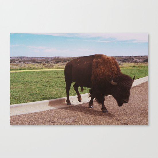 Buffalo Crossing the Road Canvas Print