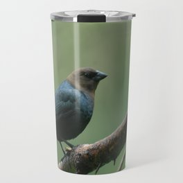 Brown Headed Cowbird, Male Travel Mug