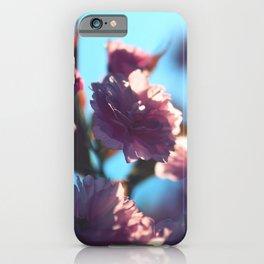 Sakura Nine - Pink Cherry Blossoms iPhone Case