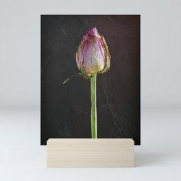Old Rose on Slate Mini Art Print