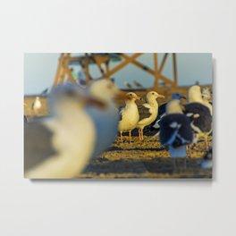 Seagulls at the Dory Fleet Metal Print