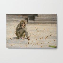 Temple ok monkeys. Nepal. Kathmandu. Metal Print