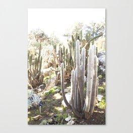 Silver Torch Cactus Canvas Print