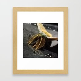 Mothra Framed Art Print