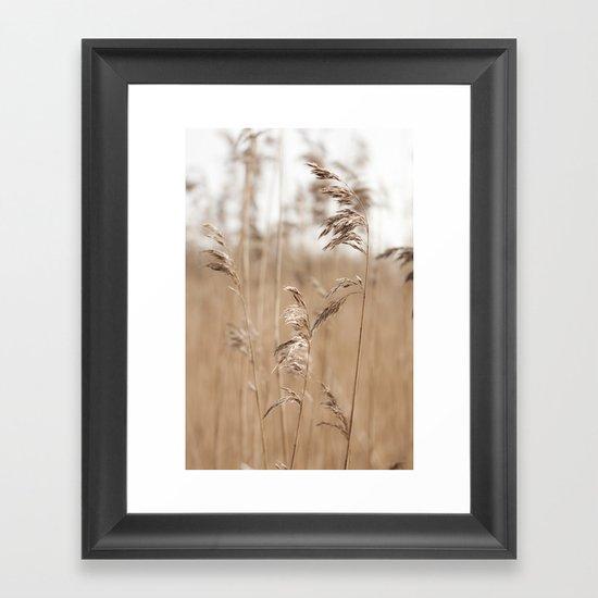 Spring Grass  Framed Art Print