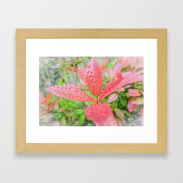 Fifth Month Photinia II Framed Art Print