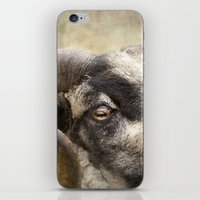 ram iPhone & iPod Skins featuring Ram by Pauline Fowler ( Polly470 )