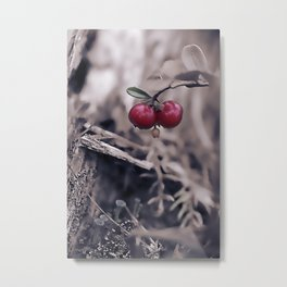 Autumn Berries. Metal Print