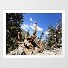Oldest living things on earth Art Print