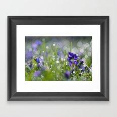 violet morning Framed Art Print