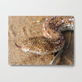 Sidewinder Snake Metal Print