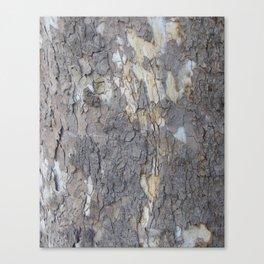brown sycamore bark Canvas Print