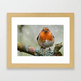 Chubby Winter Robin Framed Art Print