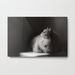 Siberian cat. Yet another rainy day. Metal Print