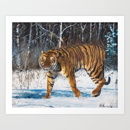 "Oil painting ""The tiger"" Art Print"