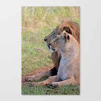 lions Canvas Prints featuring Lions by Jessica Krzywicki