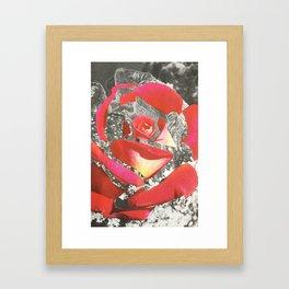 Exploded Rose Framed Art Print