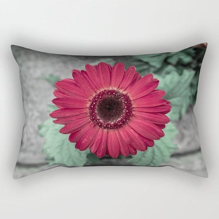 A Full Frontal Closeup of a Red Daisy Rectangular Pillow