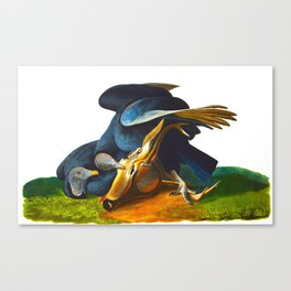 Black Vulture or Carrion Crow Eating a Dead Deer Canvas Print