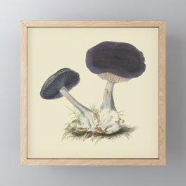 Agaricus Violaceus Framed Mini Art Print