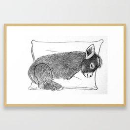Baby donkey sleeping Framed Art Print