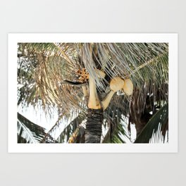 Yellow coconuts Art Print