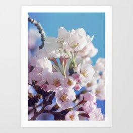 Sakura 02 Art Print