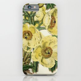 Flower meconopsis nepalensis iPhone Case