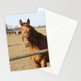 Pferde Stationery Cards