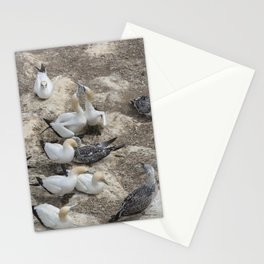 Gannets in a row Stationery Cards