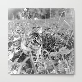 Hunting Kitty cat in the grass black and white Metal Print