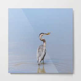 Great Blue Heron Fishing - I Metal Print
