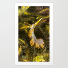 Stearns' Aeolid in a Bed of Brittle Stars Art Print
