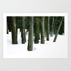 Winter Tree Grove Art Print