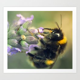 Beeutiful Lavender Art Print