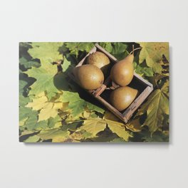 Fall still life pear pyrus fruit in wooden basket on maple leaves Metal Print