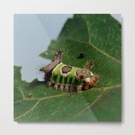 Caterpillar Eating a Leaf Metal Print