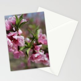 Nectarine Blossoms Stationery Cards