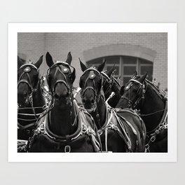 Percheron Horse Team, 2008 Art Print