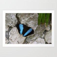 Papillon II Art Print