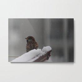 Sparrow & snow Metal Print