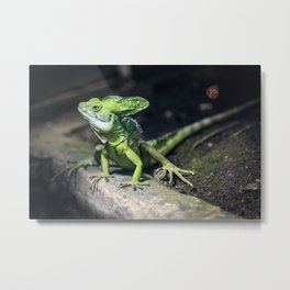 green basilisk lizard  Metal Print