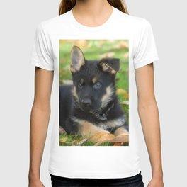 #8 #weeks #old #cute  #Shepherd #puppy T-shirt
