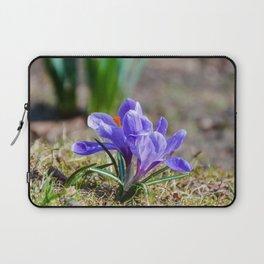 Springtime Crocus in Warsaw Laptop Sleeve